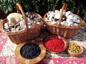 Baskets harvest